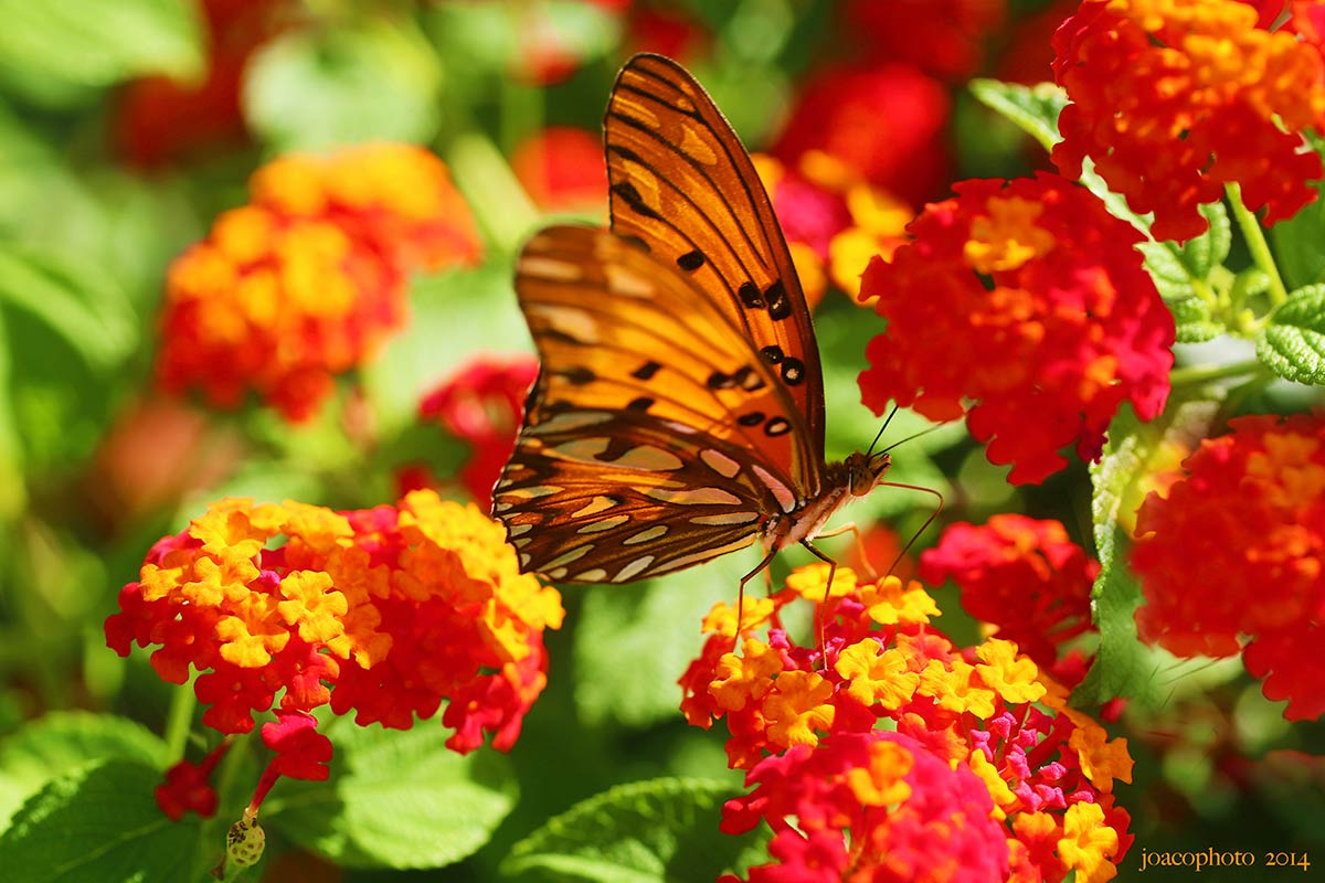 photo mariposa